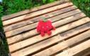 Pomidor Lidlak ma bardzo wybuchowy charakter
