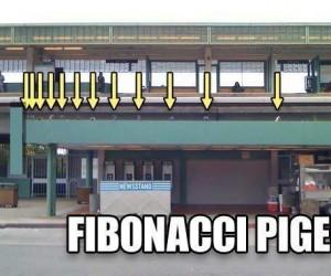 Gołębie Fibonacciego