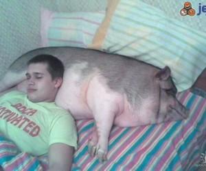 Rosyjska poduszka