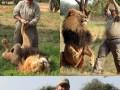 Król lwów