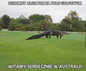 Ogromny aligator na polu golfowym