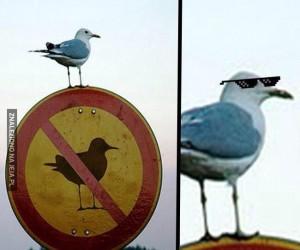 Z tym ptakiem lepiej nie zadzierać