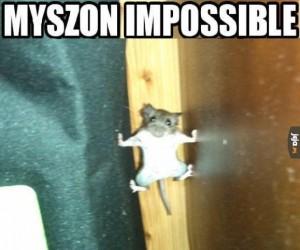 Myszon impossible