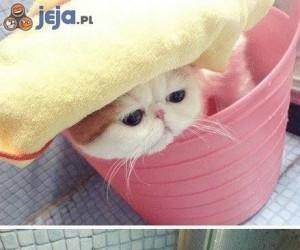 Kot, który lubi kąpiel