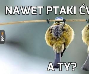 Nawet ptaki ćwiczą