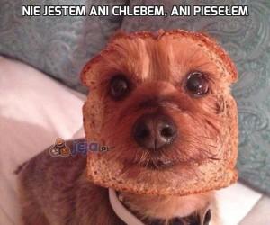Nie jestem ani chlebem, ani piesełem