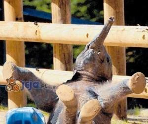 Mały słonik w akcji