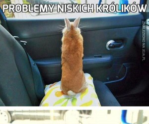 Problemy niskich królików