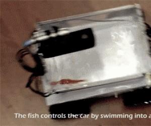 Akwarium kontrolowane przez złotą rybkę