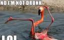 Pijany flaming
