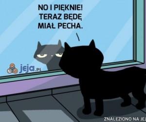 Pechowy czarny kot