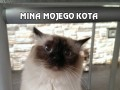 Mina mojego kota