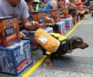 Wyścigi hot dogów