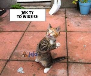 Koty mają bujną wyobraźnię