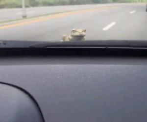 Żaba ma wyje*ane