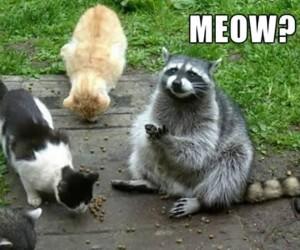 Jestę kotę