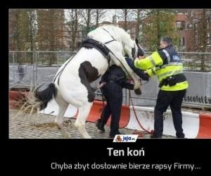 Ten koń