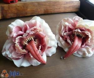 Kwiaty dla teściowej