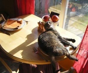 Ach, to było miejsce twojego śniadania?