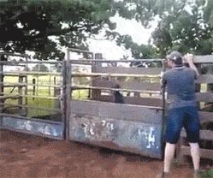 Ludzkie rodeo