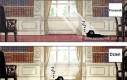 Życie kota