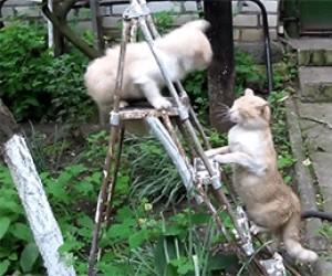 Wściekła kocia łapa furii