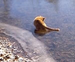 Zabawy kota na lodzie