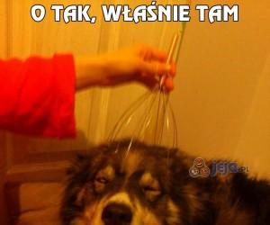 Ostatni raz masuję swojego psa...