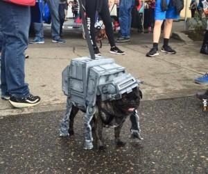 Fan Gwiezdnych Wojen