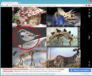 Wróbel jest dinozaurem bo Wikipedia...