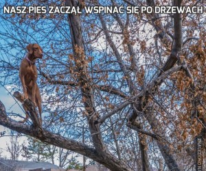 Nasz pies zaczął wspinać się po drzewach