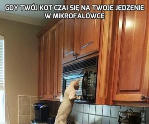 Gdy Twój kot czai się na Twoje jedzenie w mikrofalówce