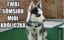 Złowieszczy psiak