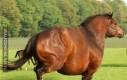 Jak schudnąc konia?