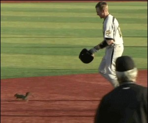 Wiewiórka na boisku