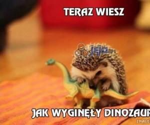 Dinozaur vs jeż