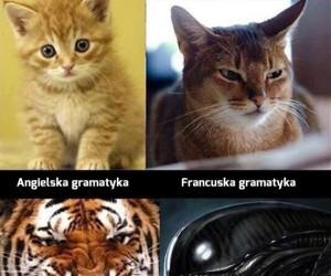 Najtrudniejszy z języków