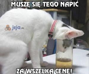 Kot kontra szklanka