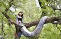 Kobieta wąż