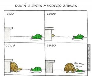 Przeciętny dzień małego żółwia