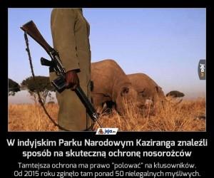 W indyjskim Parku Narodowym Kaziranga znaleźli sposób na skuteczną ochronę nosorożców