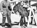 Kilka zdjęć z czasów wojny