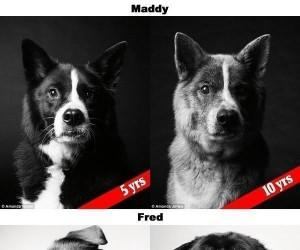 Nawet psy się starzeją