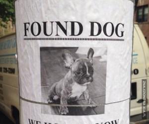 Znaleziono psa, ale już go nie oddamy!
