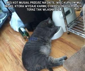 Mój kot musiał przejść na dietę