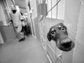 Więzienie dla zwierząt