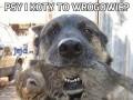 Psy i koty to wrogowie?