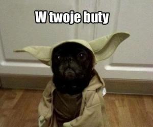 Pies Yoda