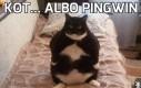 Kot... albo pingwin