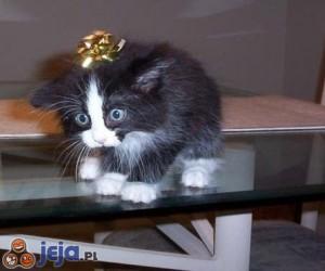 Ciekawy prezent